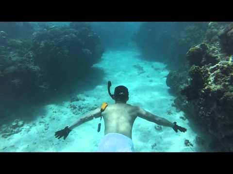 Snorkeling In Jamaica  Montego Bay