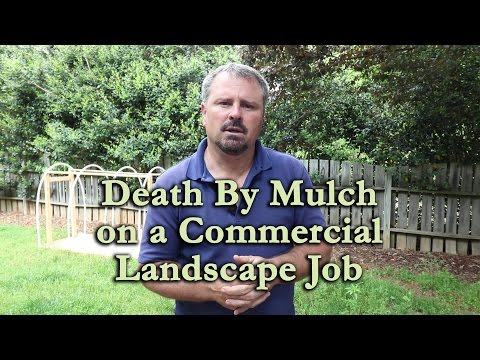 Death by Mulch and Poor Planting Techniques on a Commercial Landscape Job