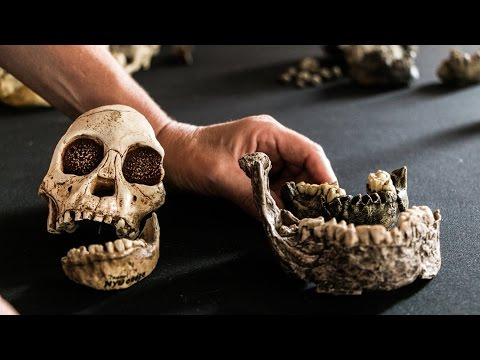 Fossils in Your Mouth: Teeth as Keys to Our Human Past