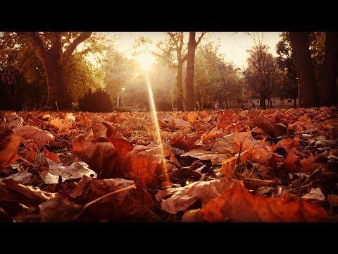 Autumn In BUDAPEST -  Margit-sziget