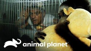 Frank resgata um filhote de gibão! | Perdido no Sudeste Asiático: Tráfico de Animais