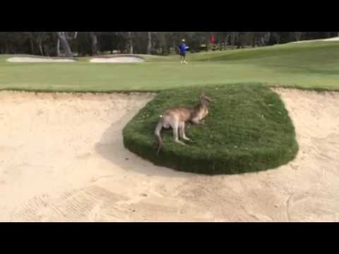 Golfing Australia Style