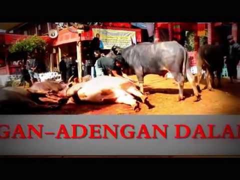 Budaya Toraja Di Dusun Bamba,kec.buntu Tagari. Denpiku ( Dende,piongan,& Kur'a' ) video