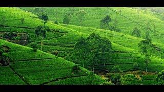 সিলেটের প্রাকৃতিক সৌন্দর্য Places to visit | All About Sylhet | Wonders of Nature | Documentary 2017