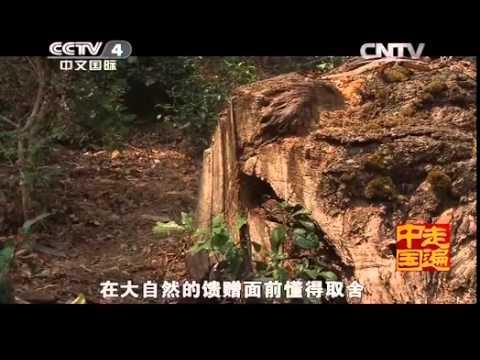 中國-走遍中國-20140615 山林裡的搖錢樹