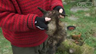 Taxidermist Who Eats Roadkill - Scroll 3:38 To See Freezer Contents