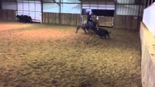Paisley- Jared Lesh Cowhorses