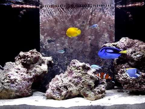90 Gallon Reef Aquarium Setup pt 4