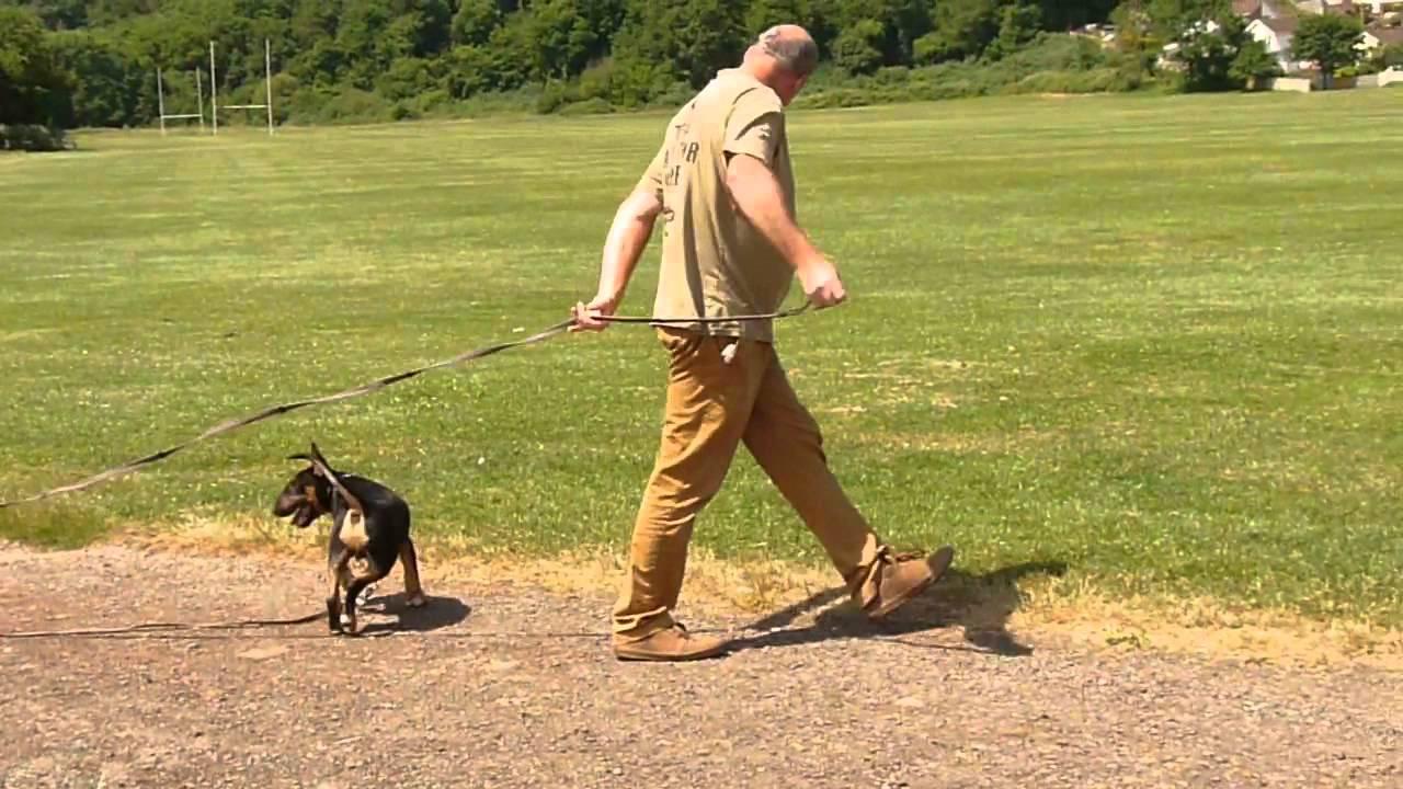 Long Dog Training Lead Long Lead Training Technique