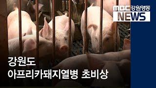 R)접경지역 돼지열병 초비상