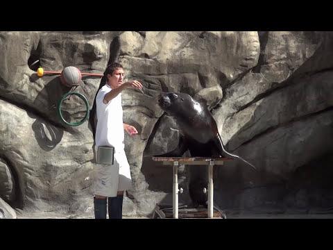 Zoo de Buenos Aires Show de Lobos Marinos Jardin Zoologico de la Ciudad de Buenos Aires