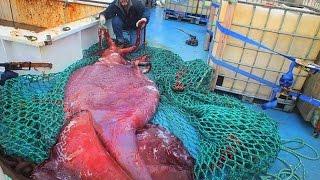10 Rare Deep Sea Catches