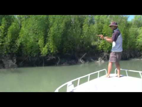 Caught On Film: Massive Barramundi Fishing