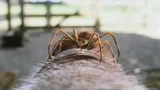 Charlotte's Web - Trailer 2