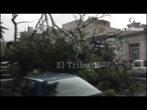 Mirá el momento en que un árbol cae sobre un auto
