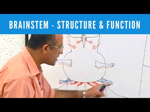 Brainstem - Structure & Function - Neuroanatomy thumbnail