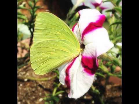 #cosmos #flower #pink #flowers #garden #nature #summer #plants #petal #plants #petals