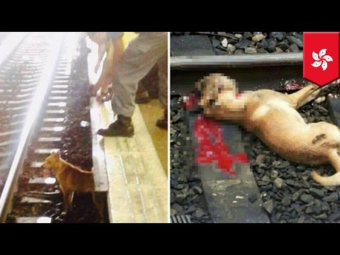 Dog killed by train: MTR conductor hits dog, animal rights activists protest at Hong Kong station