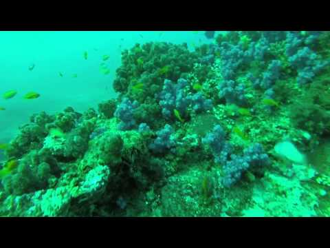 Mozambique Scuba Diving Adventure - Ponta do Ouro