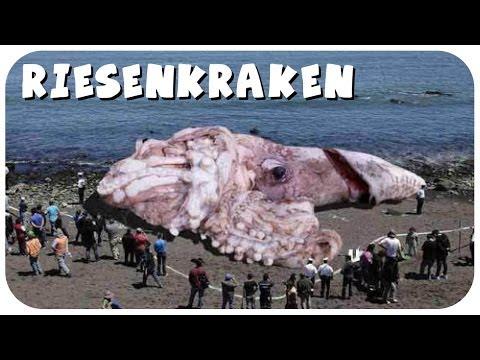 Giga-Oktopus durch Atomkatastrophe in Fukushima? - Transatlantisches Freihandelsabkommen!