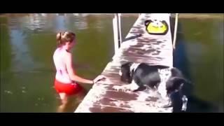 Dog vs Women Very Funny 2016
