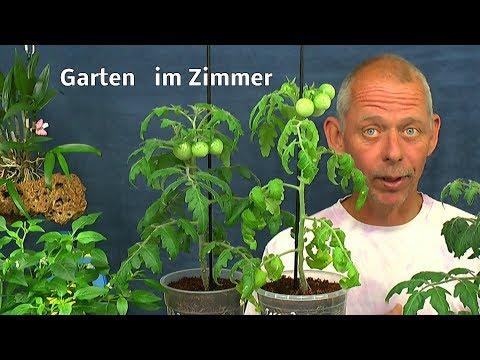 Der Garten im Haus Tomaten / Petersilie / exotische Pflanzen in der Hydrokultur