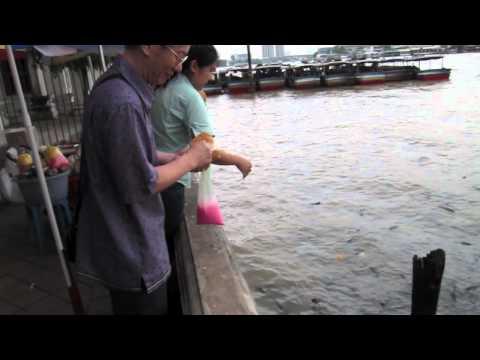 Wat Rakang – Bangkok's Fish Sanctuary Temple