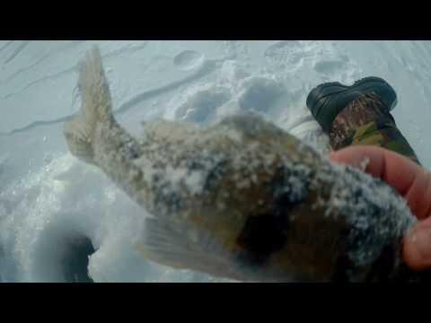 ловить налима на тюльку