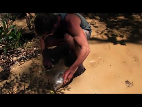 Como capturar peces pasto para pescar al vivo.