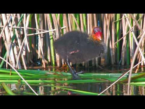 Die Wildnis kehrt zurück - Begegnungen zwischen Wildtieren und Menschen