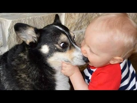 Super ridiculous BABY & TODDLER & KID videos #20 - Funny and cute compilation - Watch and laugh!