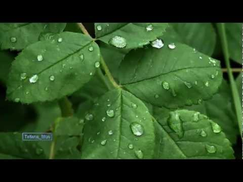 Renaissance - Raindrops & Leaves