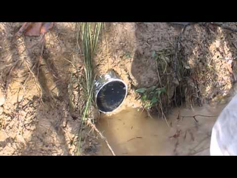 Modern Trapping Series Part 41 Raccoon caught in a False Drain Set.wmv