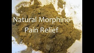 Making Wild Lettuce Pain Relief Medicine Powder