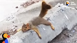 Exhausted Squirrel Mom Moves Babies To Safer Tree + Other Awesome Animal Moms | The Dodo Top 5