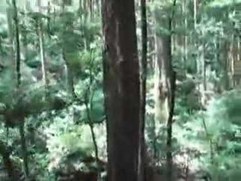 雲仙 一切経の滝「三鈷の松」