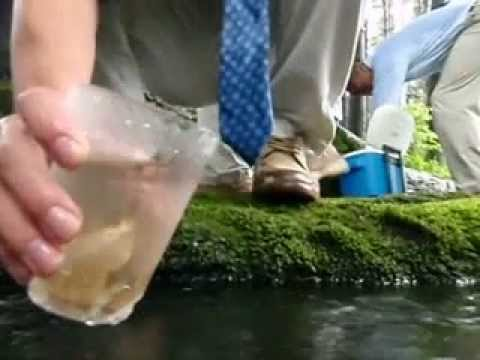 Brunswick School Trout in the Classroom Release