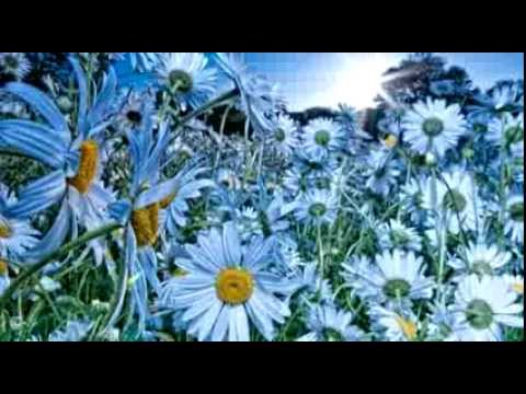 Ю.Шатунов-А лето цвета...SHatunov And summer colors...