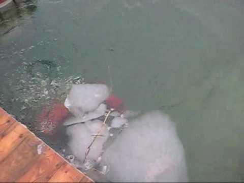 Thanet sub Aqua Club dive 2 of 50