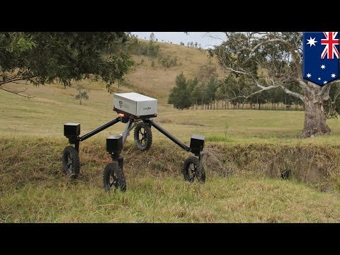 SwagBot: Australia develops cattle-herding robots that may replace farmers - TomoNews