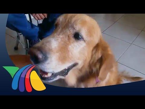 La salud y nuestras mascotas   Noticias de Veracruz
