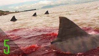 5 Most Brutal Real Life Shark Attacks