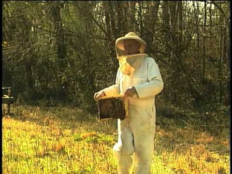 Honeybee Colony Collapse Disorder