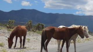 34 Born Free 34 Kid Rock Wild Horses In Cold Creek Nv