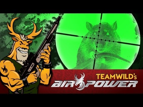 Air rifle hunting: Night Vision Rat hunt