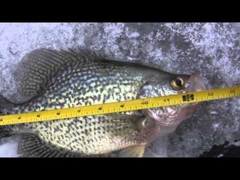 Ice fishing crappies feb 2013 youtube for Crappie ice fishing