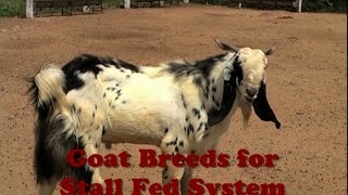 Goat Breeds for Stall Fed System
