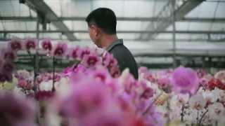 2013雲林農業博覽會甜度12影像展-雅-董又銘的故事-蔡侑勳導演 (蘭花