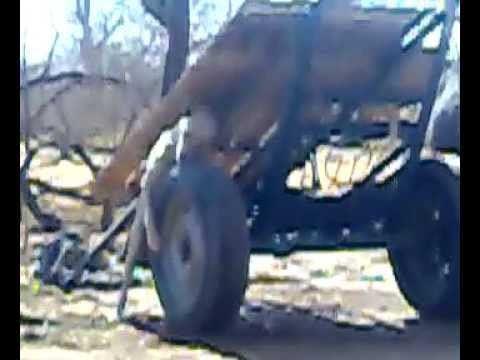 Dog had sex with chariot tyre in western sudan