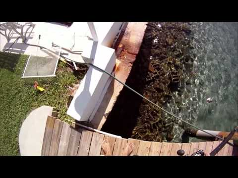 Fishing With Joop - Episode 13 - Snook Fishing Off The Dock